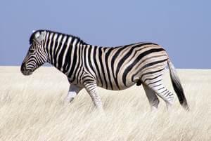 Upoutávka Namibie