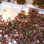 Pražené kobylky připomínají obyčejné chipsy. Jen tykadélka zůstávají mezi zuby.