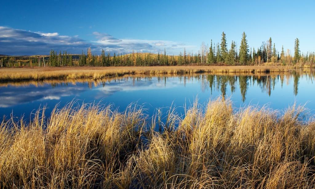Příroda kolem Fairbanks se barví do podzimních barev