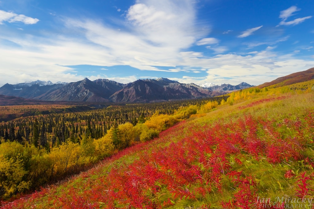 View of Matanuska glacier in fall with red flowers
