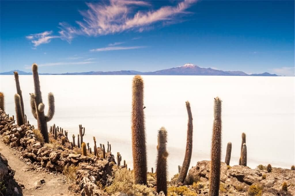 Kaktusy u Salaru de Uyuni