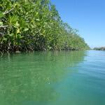 (The Mangroves od Hormiguita Viajera mir / CC BY 2.0)