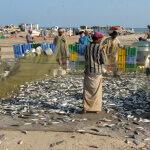 rybáři Shannah