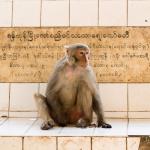 20150313 13,22 - Barma - Bagan