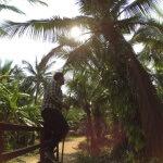 Sběrač kokosů - Koh Chang - Expedice Thajsko 2016