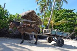 Jediná možná forma pozemní dopravy na ostrově Boipeba - auta jsou zakázána!