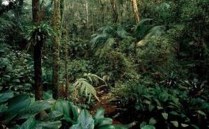 Atlantický deštný prales