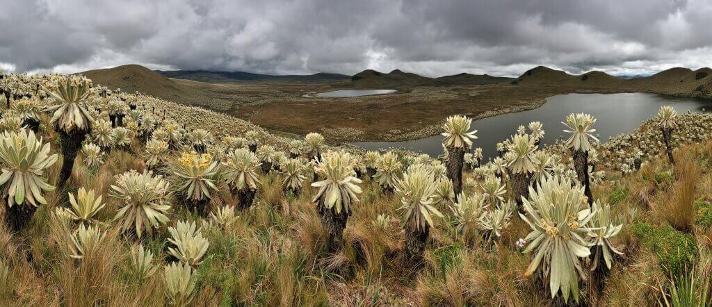 Horská step – páramo, na severu Ekvádoru