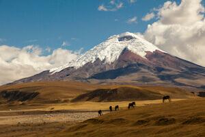 Expedice Ekvádor - červenec 2018