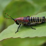 Atraktivní bude i hmyz (foto: Hugo a Caro Minaar)