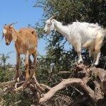 Kozy na stromě - Essaouira