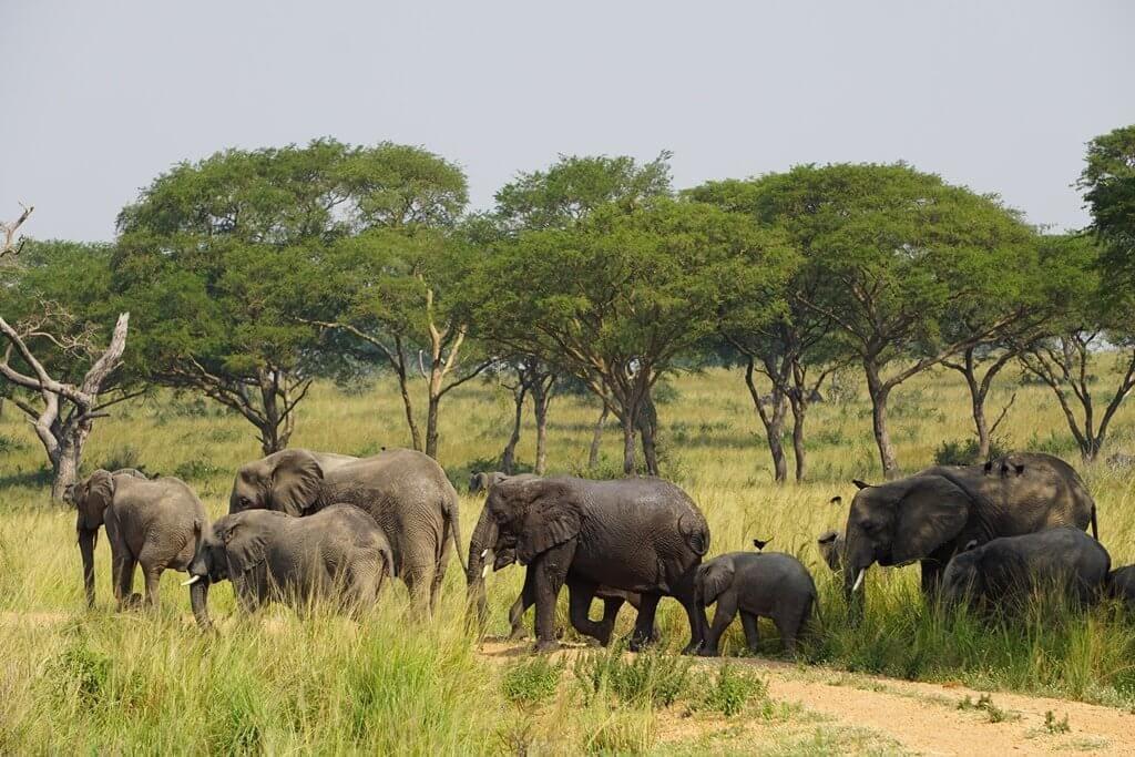 Slonní rodinka v NP Murchison Falls