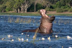 I tato nejnebezpečnější zvířata uvidíme v NP Mana Pools