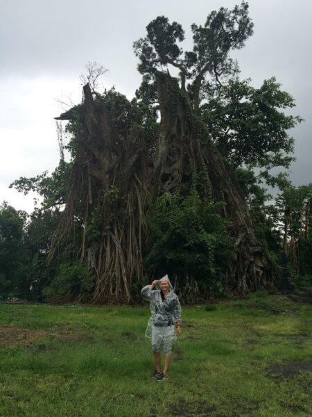 Posvátný strom, Indonésie, a prší a prší