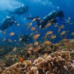 Podvodní svět kolem ostrova Pescador je sice pro zkušenější potápěče, nicméně i míst pro šnorchlování je tam víc než dost