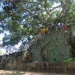 Posvátný Buddhův strom v Anuradhapura