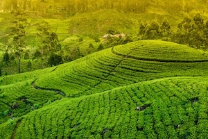 Expedice Srí Lanka - únor 2020