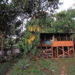Hostel uprostřed džungle