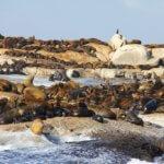 Tulení kolonie na ostrově Seal Island, Kapské město