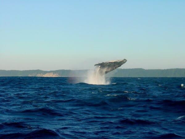 Pozorování velryb v Jižní Africe