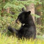Budeme mít i my štěstí a potkáme medvědy