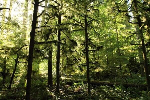 Deštné lesy na ostrově Vancouver Island