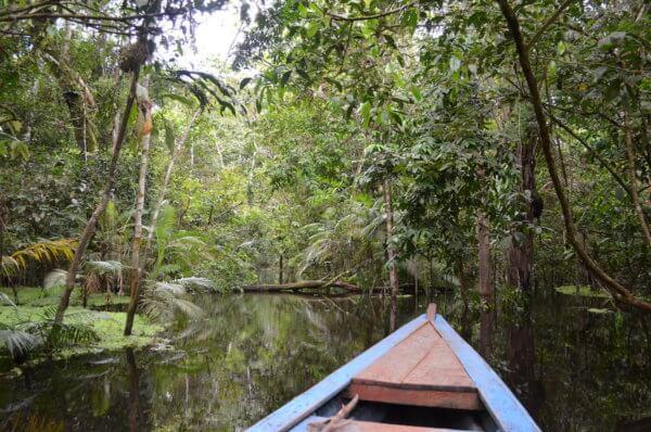 Výlety po deštném pralese na malých loďkách