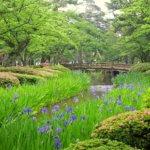 V Kanazawě kvetou ksatce