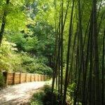 Samurajská stezka