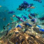 I sladkovodní šnorchlování v jezeře Malawi bude parádním zážitkem