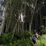 Trek skrz bambusový les