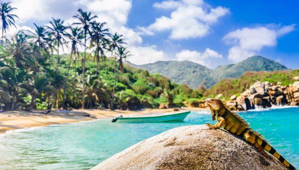 Místní leguán se vyhřívá na kameni v národním parku Tayrona