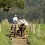 Místní farmář veze čerstvé mléko do vesnice